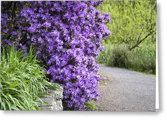 Rhodendron Greeting Cards - Purple Spring Greeting Card by Priya Ghose