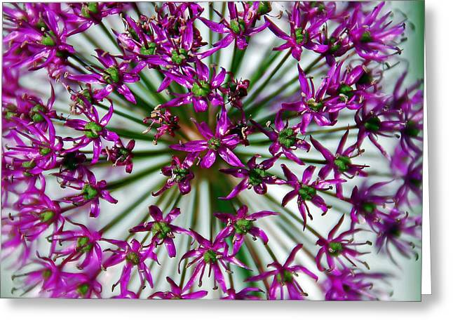 Purple Starlight Greeting Card by Aimee L Maher Photography and Art Visit ALMGallerydotcom