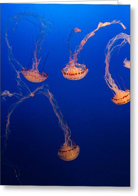 Dance Greeting Cards - Purple Striped Jellies Greeting Card by Scott Campbell
