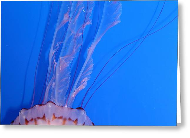 Purple Striped Jelly Fish 5D24934 Greeting Card by Wingsdomain Art and Photography