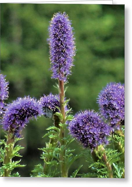 Summer Scene Greeting Cards - Purple Summer Greeting Card by Dan Sproul