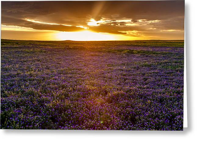 Journeys End Greeting Cards - Purple Sunset Greeting Card by Teri Virbickis