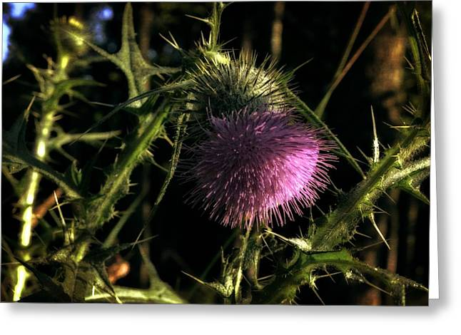 Blue Thistles Greeting Cards - Purple Thistle Flower Greeting Card by Michelle Calkins