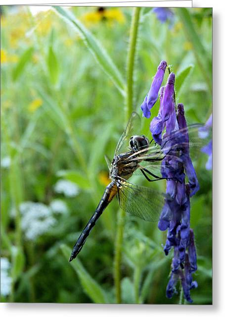 Damsel Fly Greeting Cards - Purple Throne Greeting Card by JC Findley