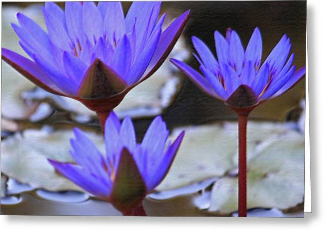 Lily Pad Greeting Cards Greeting Cards - Purple Times Three Greeting Card by Suzanne Gaff
