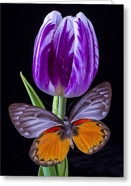 Rain Drop Greeting Cards - Purple Tulip And Butterfly Greeting Card by Garry Gay