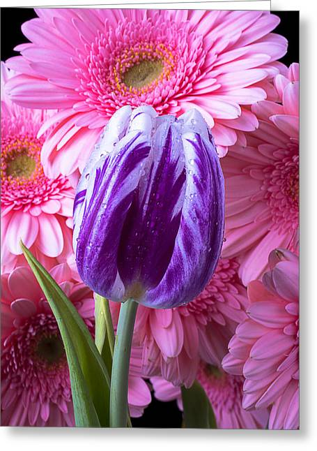 Rain Drop Greeting Cards - Purple Tulip and Pink Daisies Greeting Card by Garry Gay