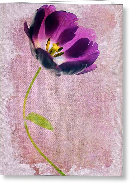 Flower Center Greeting Cards - Purple Tulip Greeting Card by Rebecca Cozart