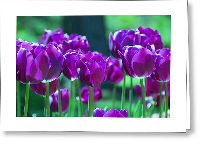 Best Sellers -  - Pinks And Purple Petals Greeting Cards - Purple Tulips Greeting Card by Allen Beatty