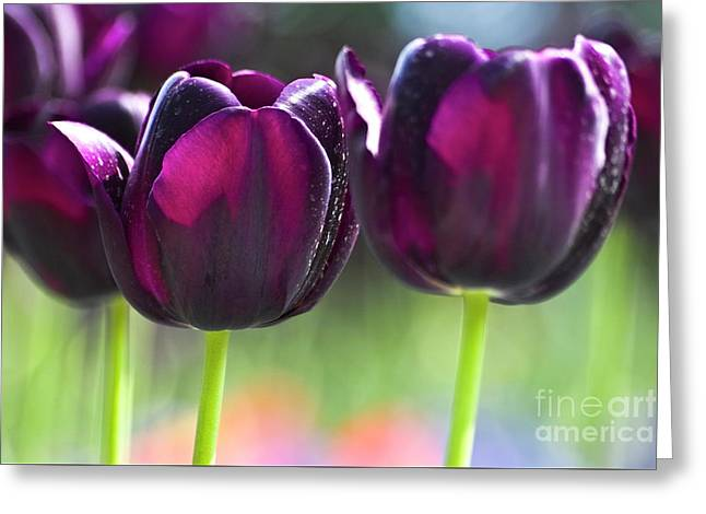 Heiko Koehrer-wagner Greeting Cards - Purple tulips Greeting Card by Heiko Koehrer-Wagner