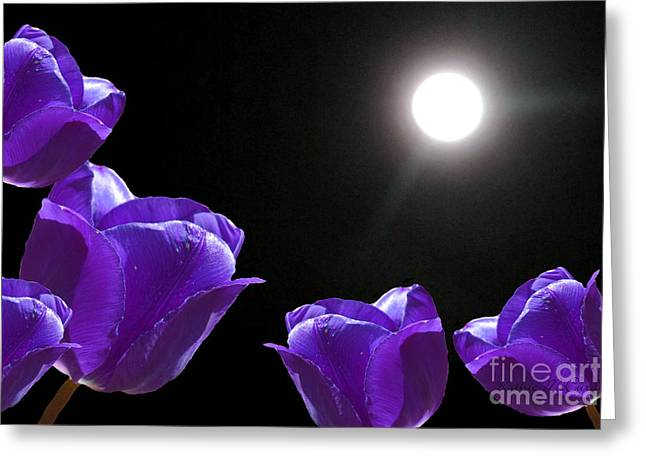 Best Sellers -  - Light And Dark Greeting Cards - Purple Tulips in the Moonlight Greeting Card by Kathie McCurdy