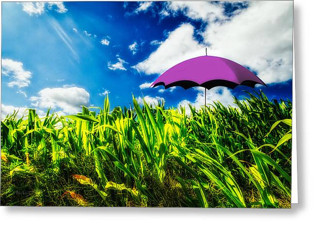 Purple Umbrella in a field of corn Greeting Card by Bob Orsillo