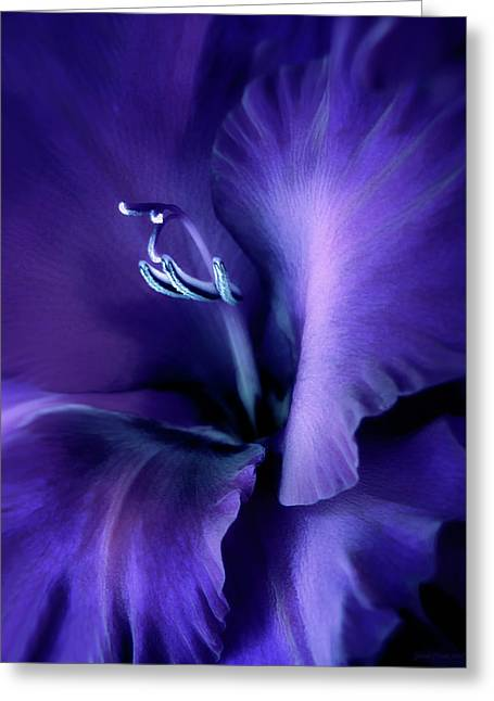 Gladiola Greeting Cards - Purple Velvet Gladiolus Flower Greeting Card by Jennie Marie Schell
