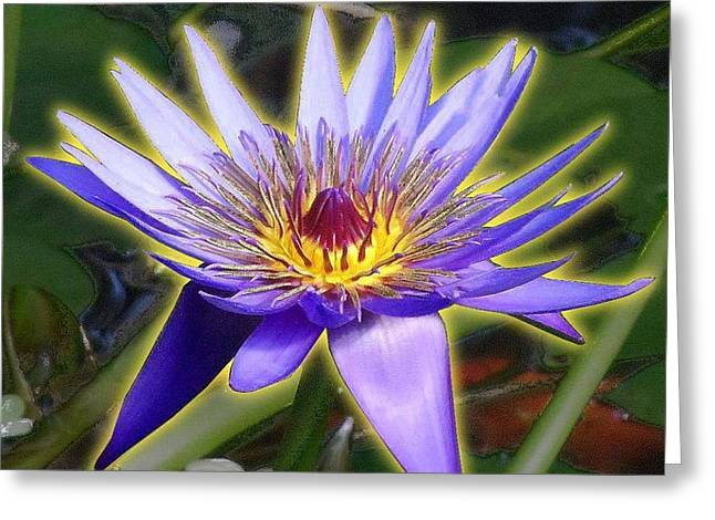Water Lilly Mixed Media Greeting Cards - Purple Water Lily Greeting Card by Edmond Hogge