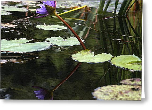 Lily Pad Greeting Cards Greeting Cards - Purple Water Lily in Watercolor Greeting Card by Suzanne Gaff