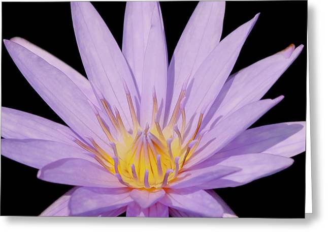 Kim Photographs Greeting Cards - Purple Water Lily Greeting Card by Kim Hojnacki