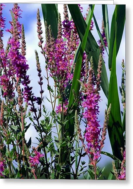 Struckle Greeting Cards - Purple Wildflowers Greeting Card by Kathleen Struckle