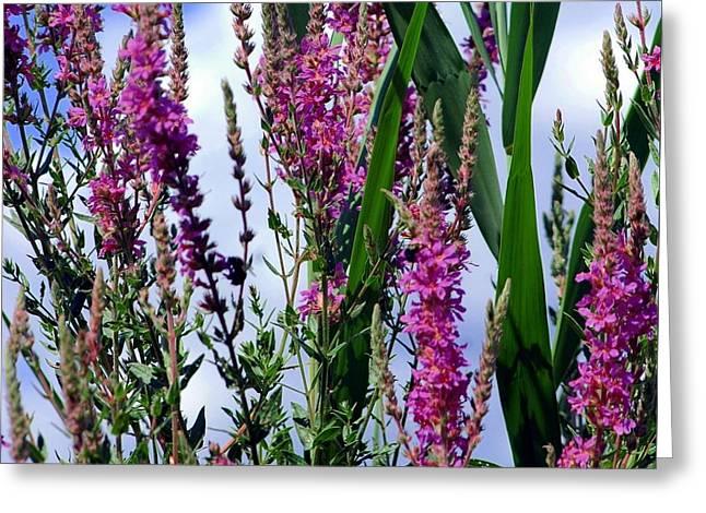Purple Wildflowers Greeting Card by Kathleen Struckle