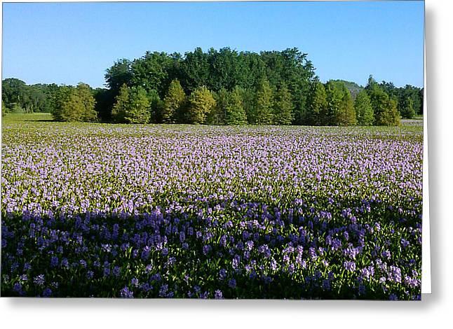 Steve Sperry Greeting Cards - Purple Wildflowers  Greeting Card by Steve Sperry