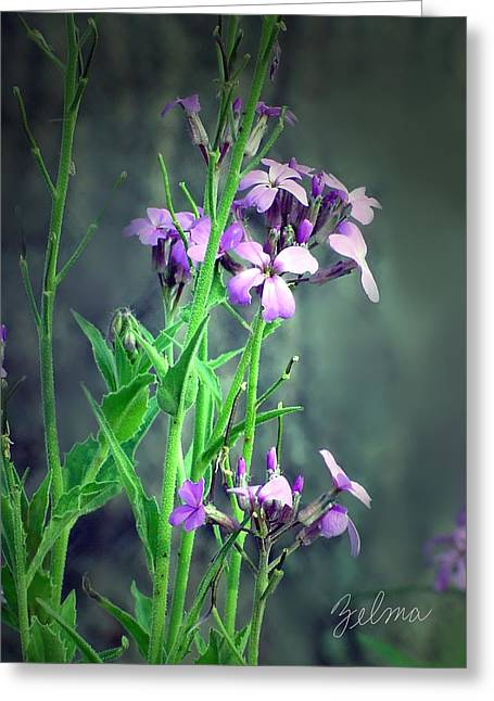 Zelma Hensel Greeting Cards - Purple Wildflowers Greeting Card by Zelma Hensel