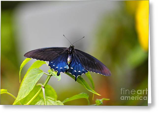 Purple Wings Greeting Card by Jay Nodianos