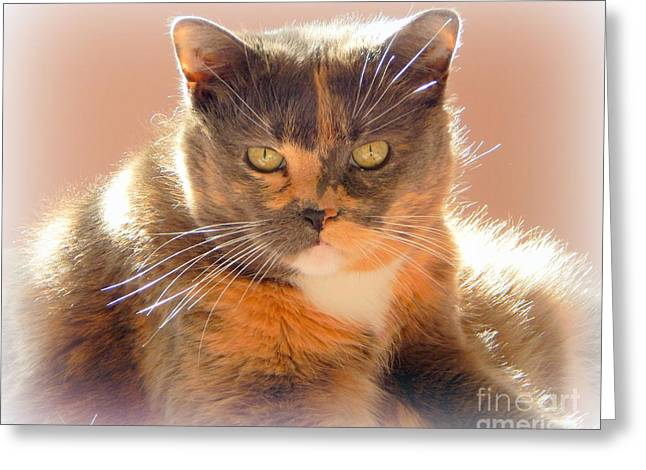 House Pet Greeting Cards - Purrfect  Greeting Card by Karen Cook
