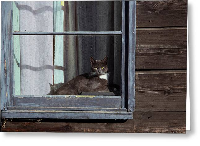 Kathy Bassett Greeting Cards - Purrfect Greeting Card by Kathy Bassett