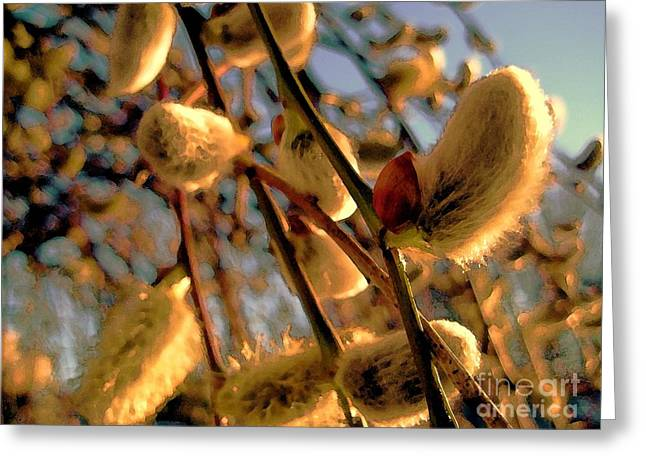 Pussy Willow Branches Greeting Cards - Pussy Willow Buds Greeting Card by Susan Carella