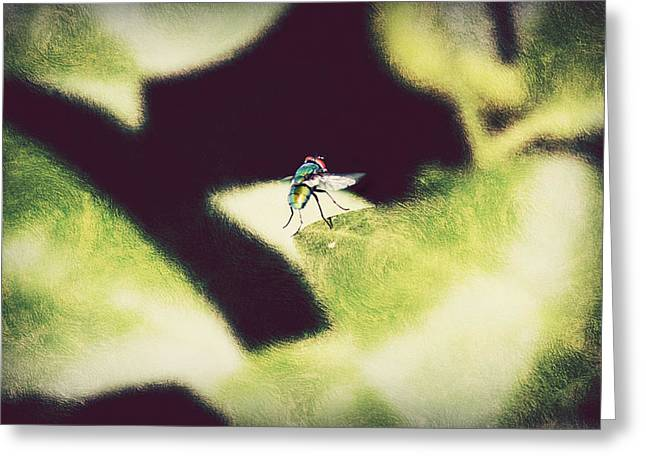 Spider And Fly Greeting Cards - Putting on the Brakes Greeting Card by Melanie  Lankford Photography