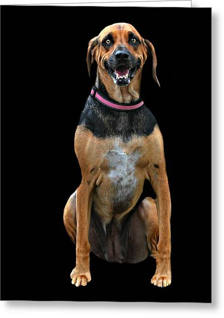 Animal Shelter Greeting Cards - Murray Greeting Card by Diana Angstadt
