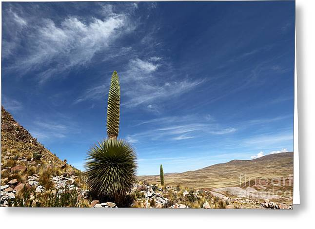 Bromeliad Greeting Cards - Puya raimondii The Queen of the Andes Greeting Card by James Brunker
