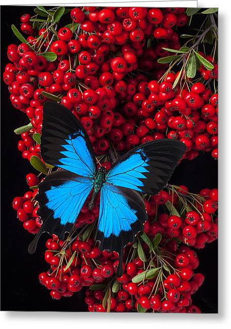 Red Berries Greeting Cards - Pyracantha and Butterfly Greeting Card by Garry Gay