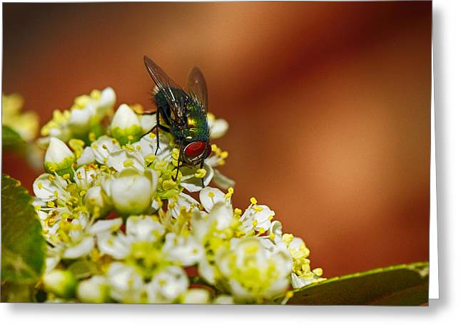 Flowering Bush Greeting Cards - Pyracantha and Fly Greeting Card by Karen Slagle