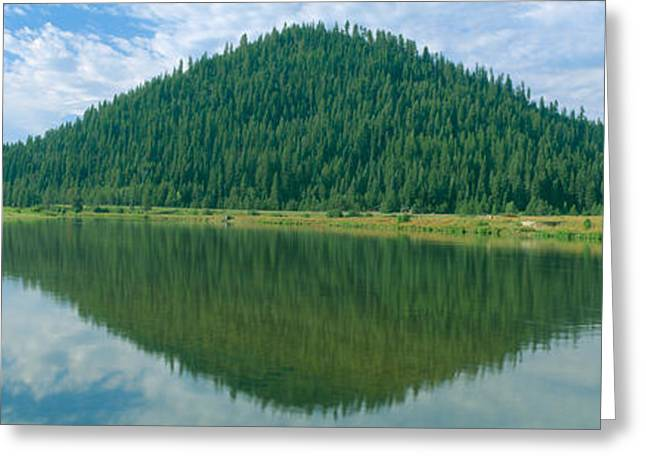 Plantlife Greeting Cards - Pyramid Of Pines, Smith Ferry, Idaho Greeting Card by Panoramic Images