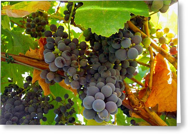 Red Wine Prints Greeting Cards - Pyrenees Winery Grapes Greeting Card by Michele  Avanti