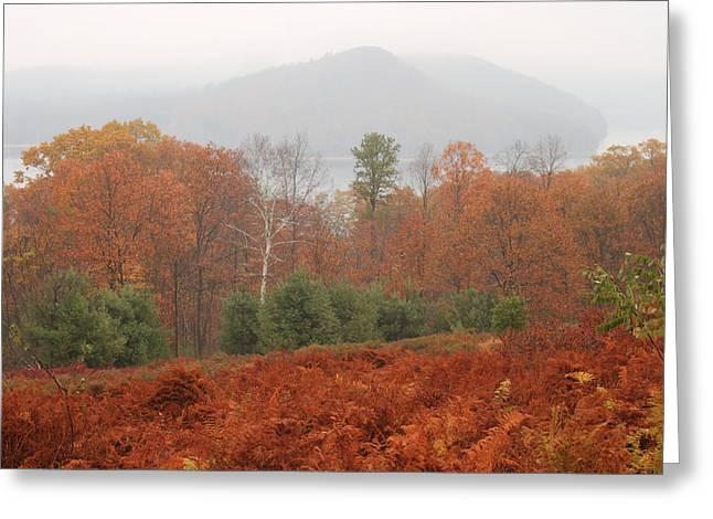 Quabbin Reservoir Late Autumn Oak And Fern Foliage Greeting Card by John Burk