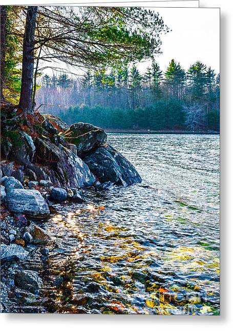 Western Ma Greeting Cards - Quabbin Rocky Shore Greeting Card by Libby  Lord