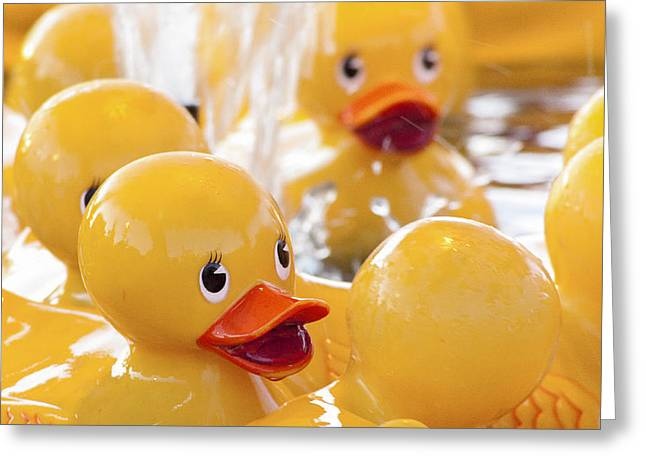 Rubber Ducky Greeting Cards - Quackers Greeting Card by Caitlyn  Grasso