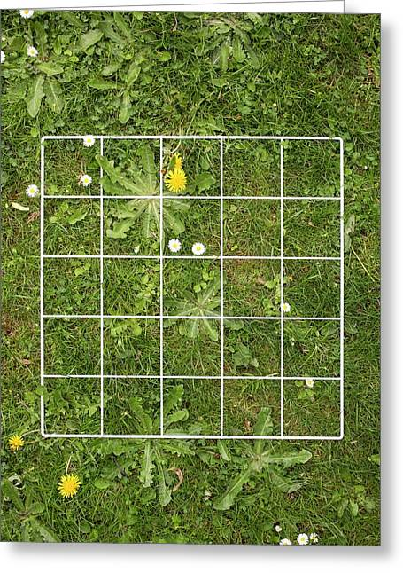 Quadrat On A Lawn With Weeds Greeting Card by Science Photo Library