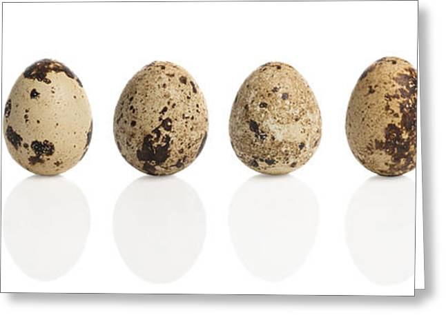 Quail Greeting Cards - Quail Eggs Greeting Card by Amanda And Christopher Elwell