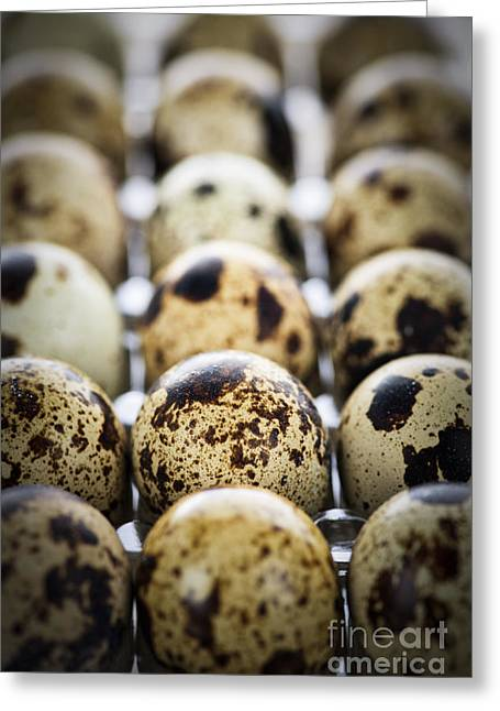 Shell Pattern Greeting Cards - Quail eggs Greeting Card by Elena Elisseeva