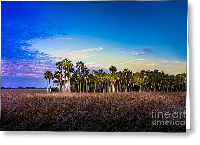 Gulf Of Mexico Scenes Greeting Cards - Quailty Time Greeting Card by Marvin Spates