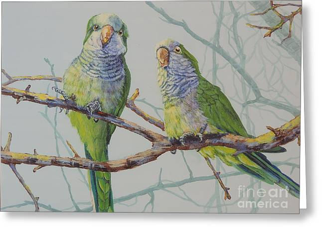 Quaker Parrot Greeting Cards - Quaker Chat Greeting Card by Sandra Williams