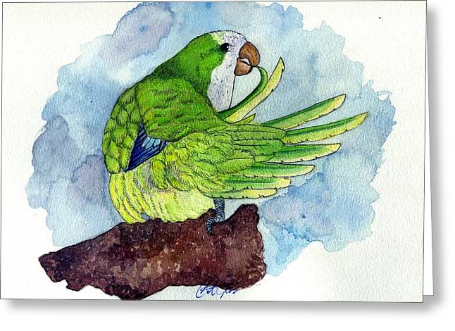Quaker Paintings Greeting Cards - Quaker Parakeet Bird Portrait   Greeting Card by Olde Time  Mercantile