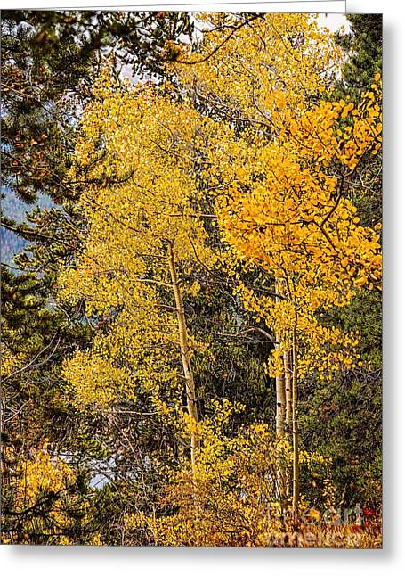 Quaker Photographs Greeting Cards - Quakers Greeting Card by Jon Burch Photography