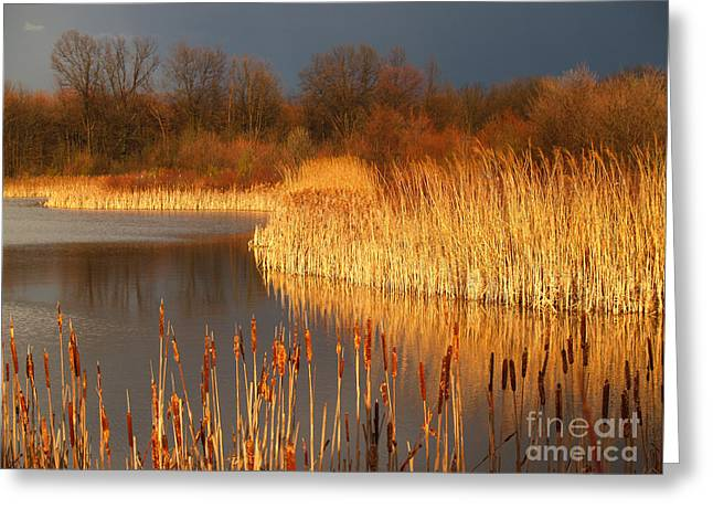 Quakertown Marsh Before Spring Storm Greeting Card by Anna Lisa Yoder