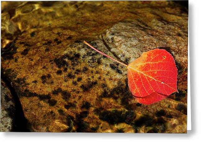 Quaking Aspen Leaf In Fall Colors Greeting Card by Maresa Pryor