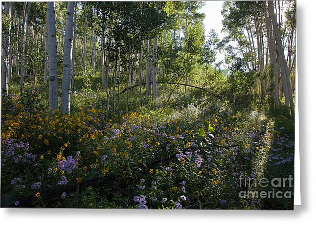 Multiflora Greeting Cards - Quaking Aspen Woodland Greeting Card by Greg Dimijian