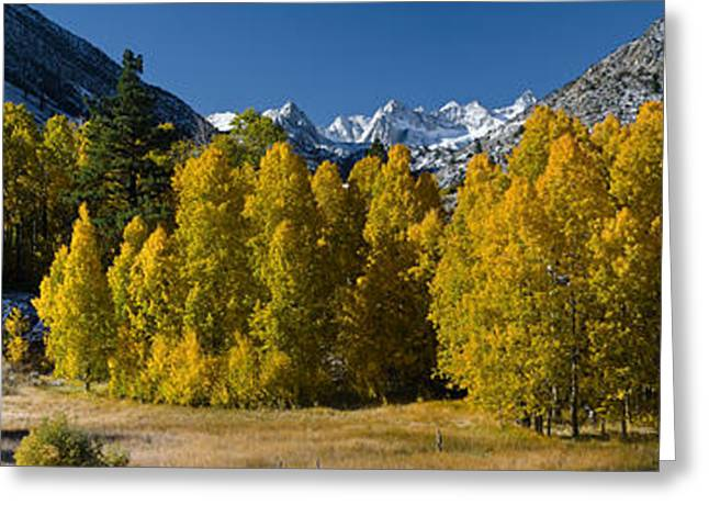 Bishops Peak Greeting Cards - Quaking Aspens Populus Tremuloides Greeting Card by Panoramic Images