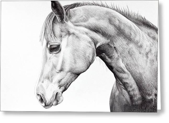 Quarter Horses Drawings Greeting Cards - Quarter Horse Drawing Greeting Card by Karen Broemmelsick